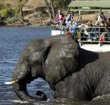 Seeing elephants on a River game cruise