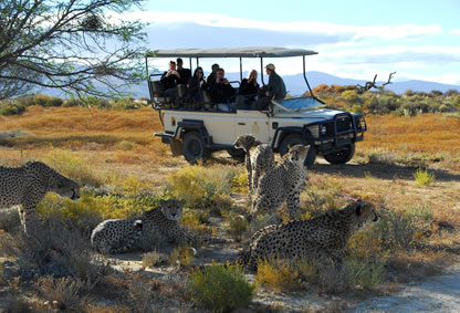 Game drive in Aquila. Cheetah Rehabilitation
