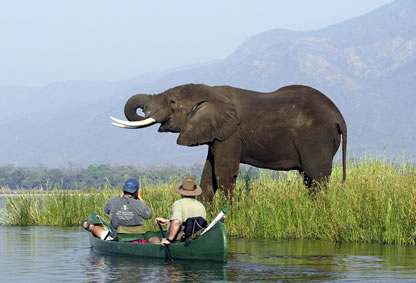 Mana Pools: Classic Zimbabwe Explorer Safari